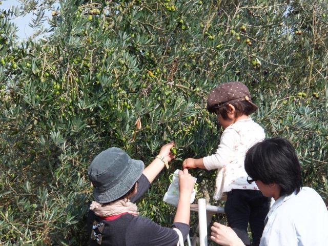 牛窓オリーブ収穫祭