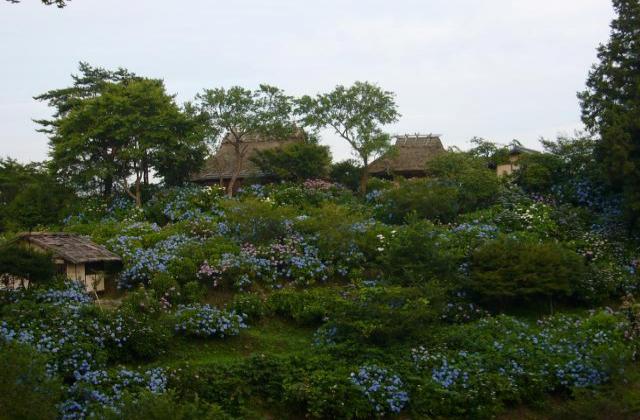 花の山寺あじさいまつり