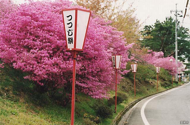 【2021年開催中止】春らんまん!弥高つつじ祭