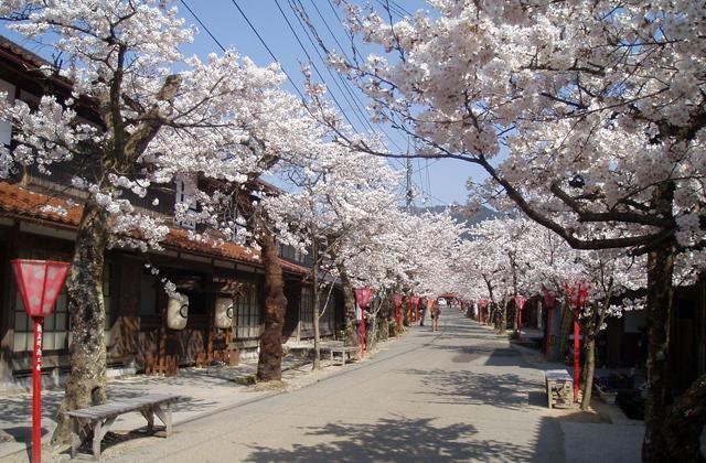 がいせん桜祭り2020