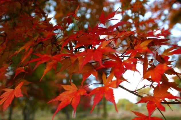 【2020年中止】越畑ふるさと村・秋の紅葉まつり