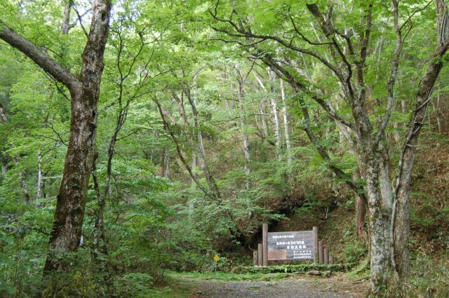 若杉天然林入口