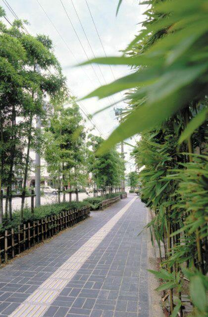 竹原の竹並木