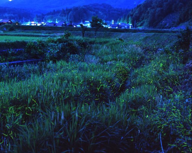 岩戸ホタル祭り