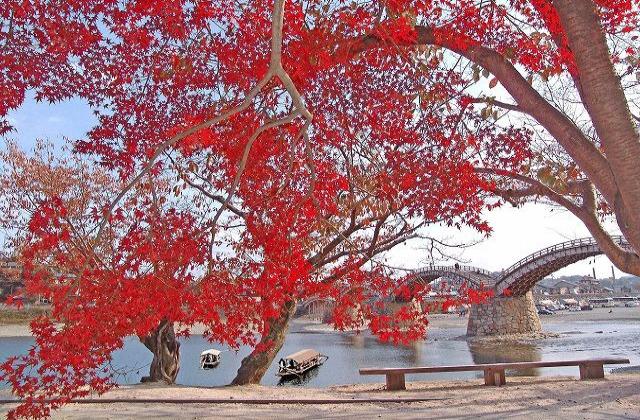 秋の遊覧船「もみじ舟」