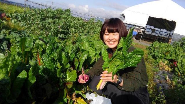 花の海 季節の野菜収穫体験・芋掘り体験とフルーツ狩り(食べ放題)