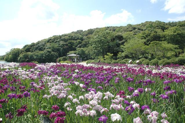 物見山総合公園