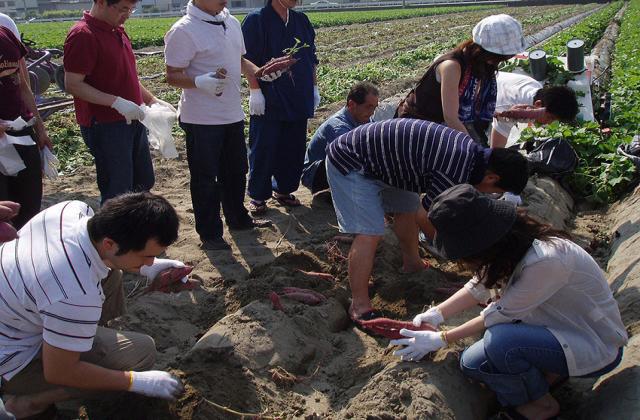 芋掘り体験農園  里むすめ畑