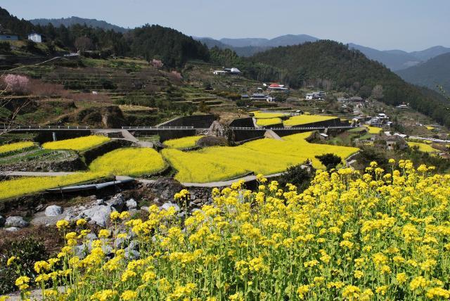 【一部イベント中止】江田菜の花の里菜の花まつり