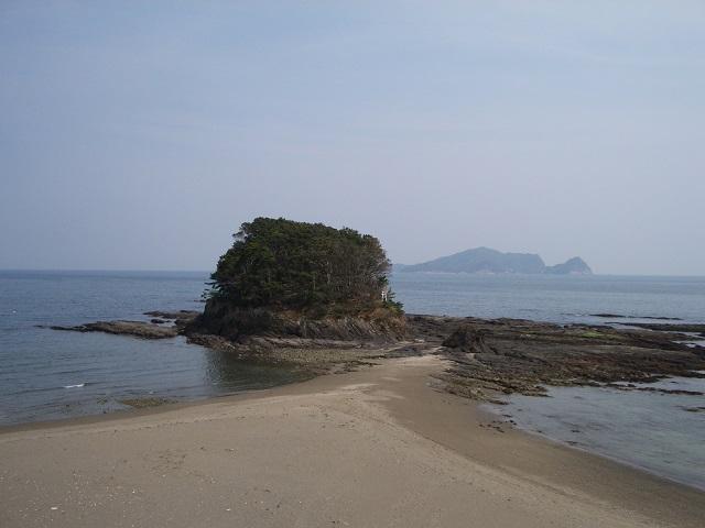 松樹ka海岸