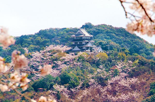 日和佐城の桜