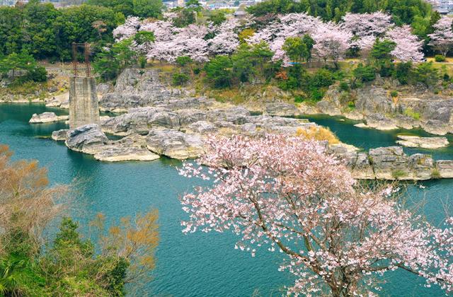 美濃田の淵の桜