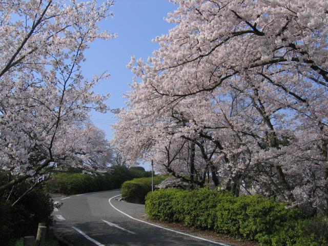 Shotsuji mountain★37203ab2010002524