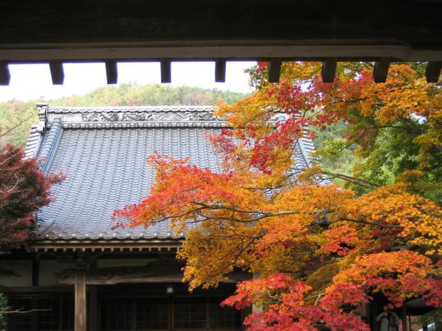 法泉寺廟紅葉節