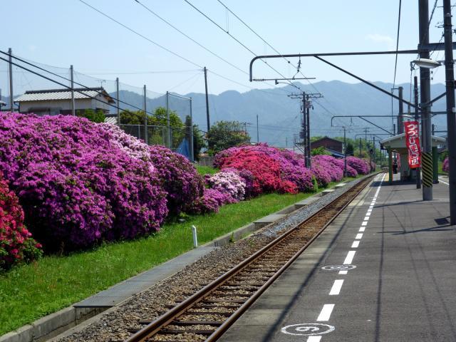 【2021年中止】豊浜駅つつじ祭り