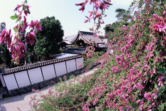萩原寺の萩