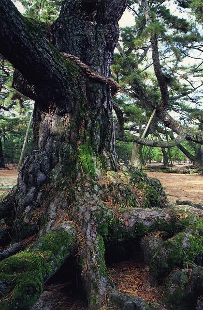 津田の松原・琴林公園