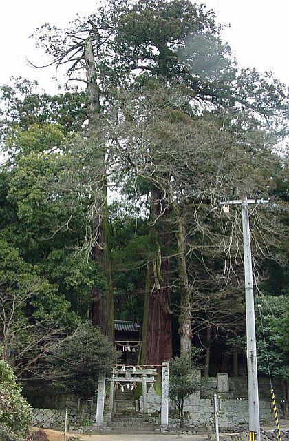 津柳二本杉熊野神社の二本杉