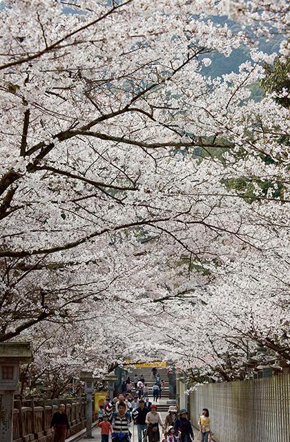 桜花祭(香川県琴平町)