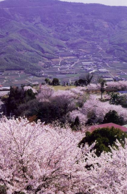 【2021年中止】朝日山森林公園桜まつり