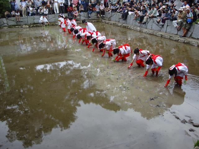 大山祇神社御田植祭