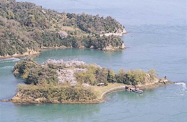 能島城跡の桜