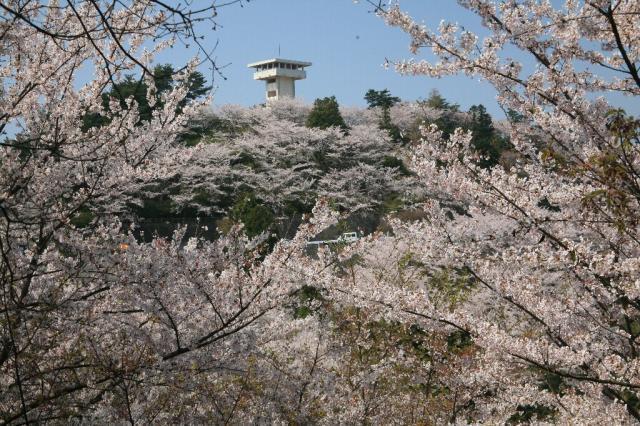 谷上山公園