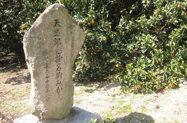 名駒ミカン(県指定天然記念物)