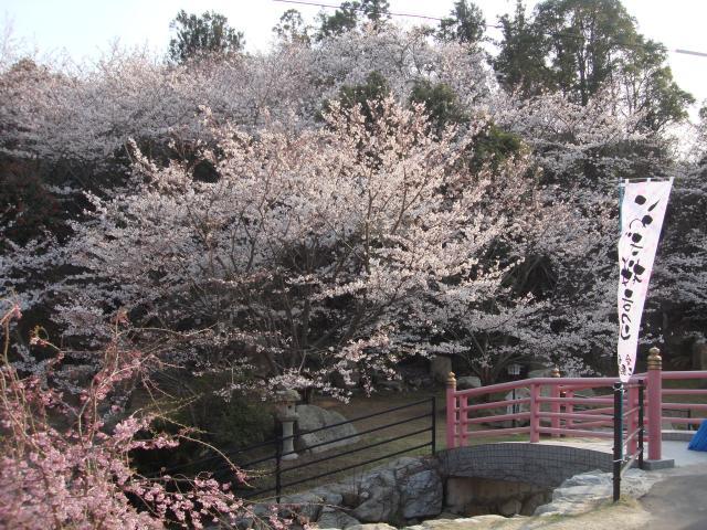 岩城桜公園