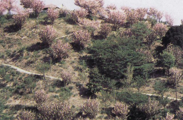 金毘羅山公園