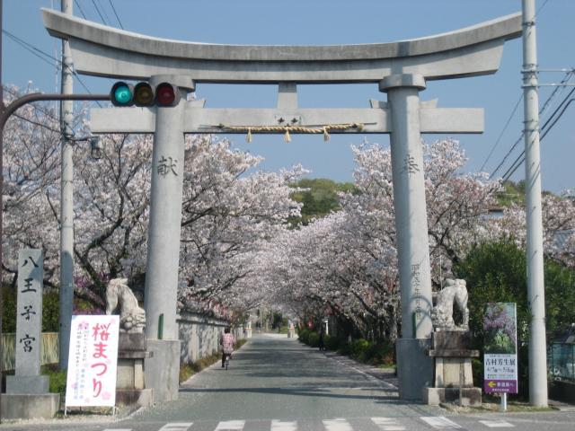 【開催中止】桜まつり(八王子公園)