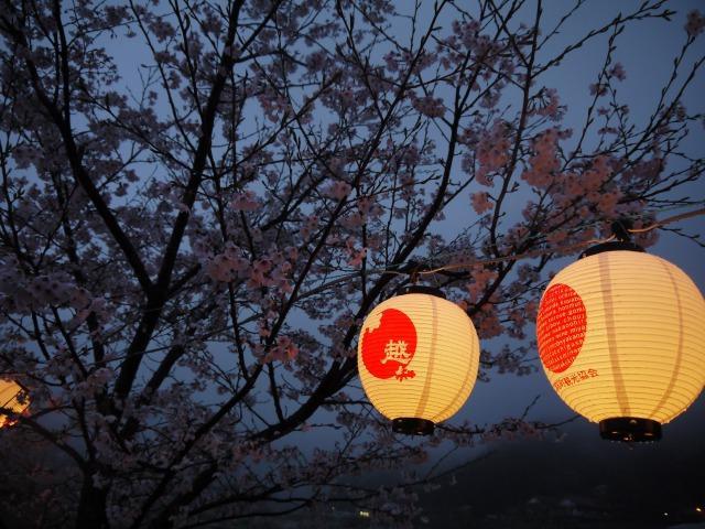 ぼんぼり桜まつり