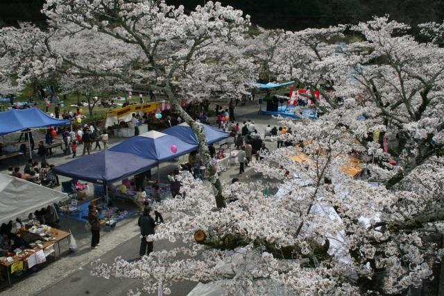 家地川桜まつり