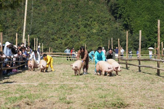 畜産フェスティバル&コスモス祭り