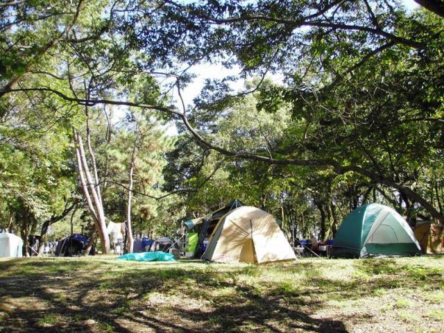 土佐西南大規模公園(大部分地區)入野松原露營地
