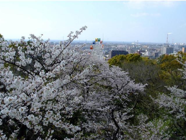 延命公園の桜