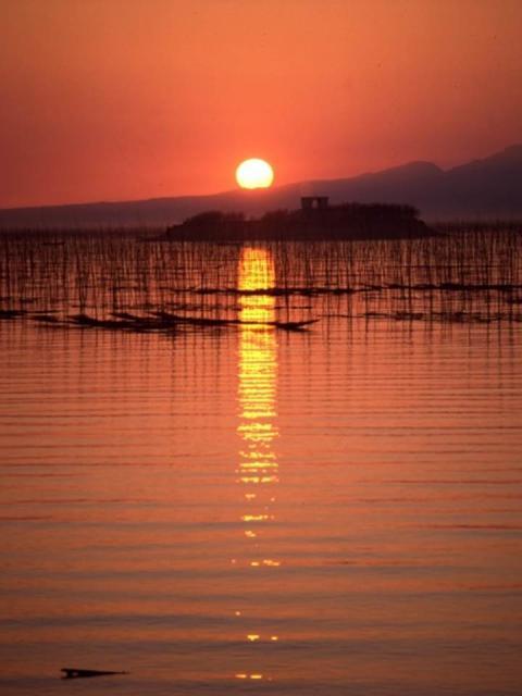 有明海中の海苔畑