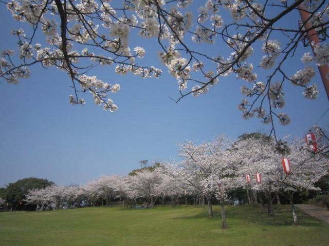第8回城島町民の森公園桜まつり