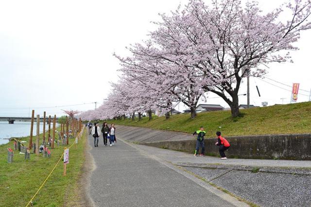 今川堤サイクリング道路