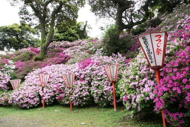 宝福寺山つつじ祭り