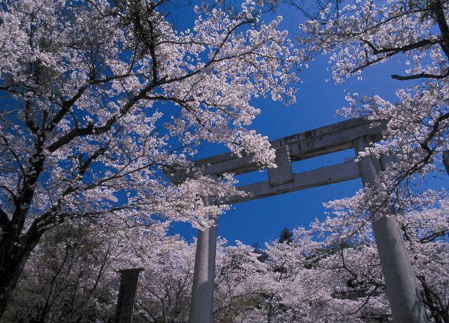 春の縁結び大祭