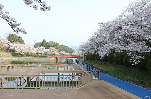甘木公園(福岡県朝倉市)