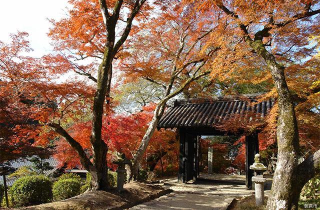 秋月黒門周辺の紅葉