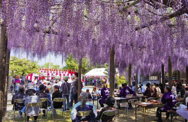 上高場大藤祭り【2021年は開催中止】