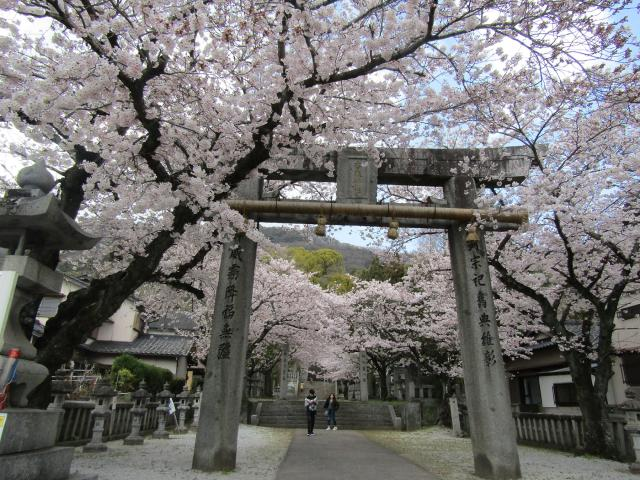 香春町内「桜の名所」