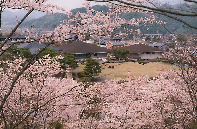 西渓公園のツツジ・桜