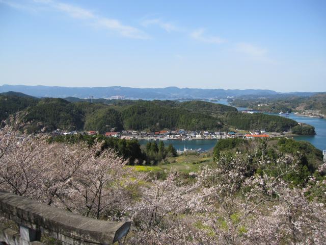 高尾山公園の桜