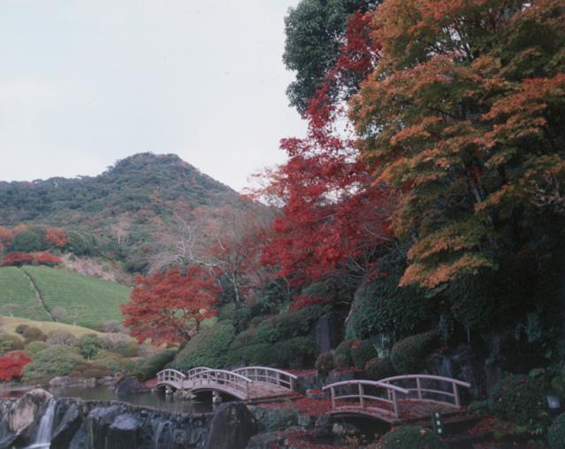 慧洲園的紅葉