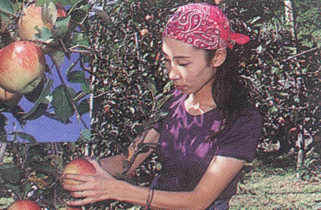 まるじゅんリンゴ園