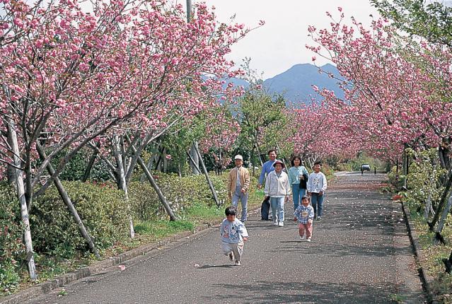 桜ケ丘公園(曲川公園)